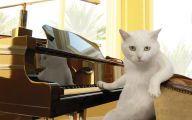 Funny Cat Playing 29 Widescreen Wallpaper