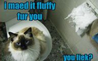 Funny Cat Playing 35 Cool Wallpaper