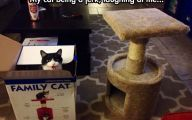 Funny Cat Playing 36 Background