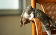 Funny Cat Playing 45 Widescreen Wallpaper