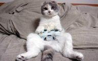 Funny Cat Playing 51 Free Wallpaper