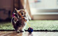 Funny Cat Playing 6 Desktop Wallpaper