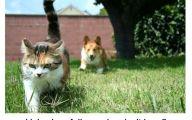 Funny Cat Running 12 Widescreen Wallpaper