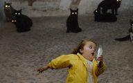 Funny Cat Running 19 Desktop Wallpaper