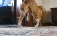Funny Cat Running 27 Background