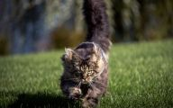 Funny Cat Running 3 Wide Wallpaper