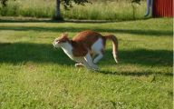 Funny Cat Running 30 Cool Wallpaper