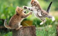 Funny Cat Running 32 Desktop Background