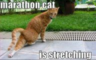 Funny Cat Running 35 Widescreen Wallpaper