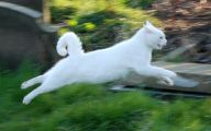 Funny Cat Running 37 Cool Wallpaper