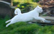 Funny Cat Running 37 Cool Wallpaper