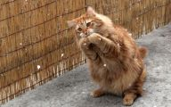 Funny Cat Running 38 High Resolution Wallpaper
