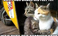 Funny Cat Running 39 Desktop Wallpaper