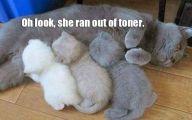 Funny Cat Running 5 Desktop Background
