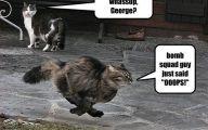 Funny Cat Running 9 Desktop Wallpaper