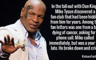 Funny Celebrity Facts 24 Free Wallpaper