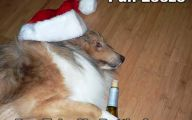 Funny Christmas Dogs 1 Wide Wallpaper
