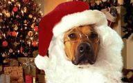 Funny Christmas Dogs 10 Background Wallpaper