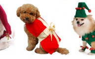 Funny Christmas Dogs 12 Desktop Background