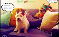 Funny Christmas Dogs 14 Widescreen Wallpaper
