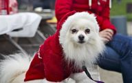 Funny Christmas Dogs 15 Cool Hd Wallpaper