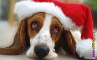 Funny Christmas Dogs 2 Background Wallpaper