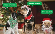 Funny Christmas Dogs 20 Free Wallpaper