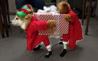 Funny Christmas Dogs 22 Background Wallpaper