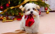 Funny Christmas Dogs 25 Hd Wallpaper