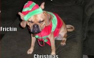 Funny Christmas Dogs 27 Background Wallpaper