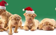 Funny Christmas Dogs 29 Desktop Wallpaper