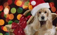 Funny Christmas Dogs 30 Cool Wallpaper