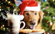 Funny Christmas Dogs 31 Hd Wallpaper