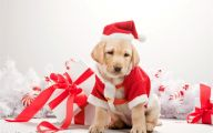 Funny Christmas Dogs 32 Widescreen Wallpaper