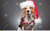 Funny Christmas Dogs 33 Background Wallpaper