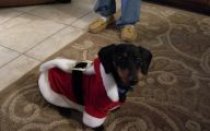 Funny Christmas Dogs 5 Background Wallpaper