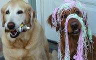 Funny Christmas Dogs 7 Cool Hd Wallpaper