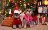 Funny Christmas Dogs 8 Desktop Wallpaper