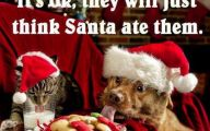 Funny Christmas Dogs 9 Cool Hd Wallpaper