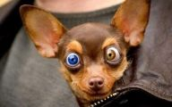Funny Clips Of Dogs 11 Hd Wallpaper