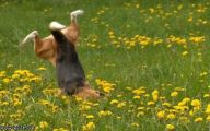 Funny Clips Of Dogs 13 Background Wallpaper