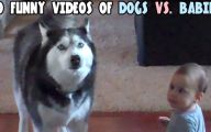 Funny Clips Of Dogs 14 Wide Wallpaper