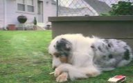 Funny Clips Of Dogs 16 High Resolution Wallpaper