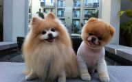 Funny Clips Of Dogs 18 Hd Wallpaper