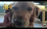 Funny Clips Of Dogs 2 Desktop Background