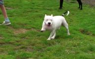 Funny Clips Of Dogs 23 Widescreen Wallpaper