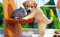 Funny Clips Of Dogs 27 Cool Hd Wallpaper