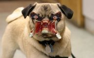 Funny Clips Of Dogs 5 Hd Wallpaper