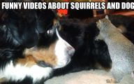 Funny Clips Of Dogs 7 Free Wallpaper