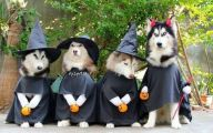 Funny Costumes 2014 5 Background Wallpaper